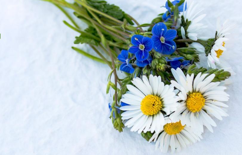 dank je wel bloemen